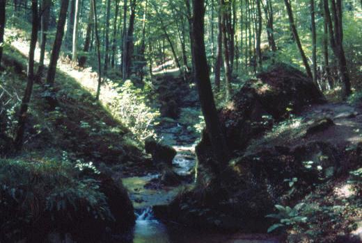 """The """"Halerbaach"""" near Beaufort, a paradise for cryptogams"""