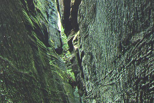 Narrow crevices with special microclimatic conditions hold often rare cryptogams